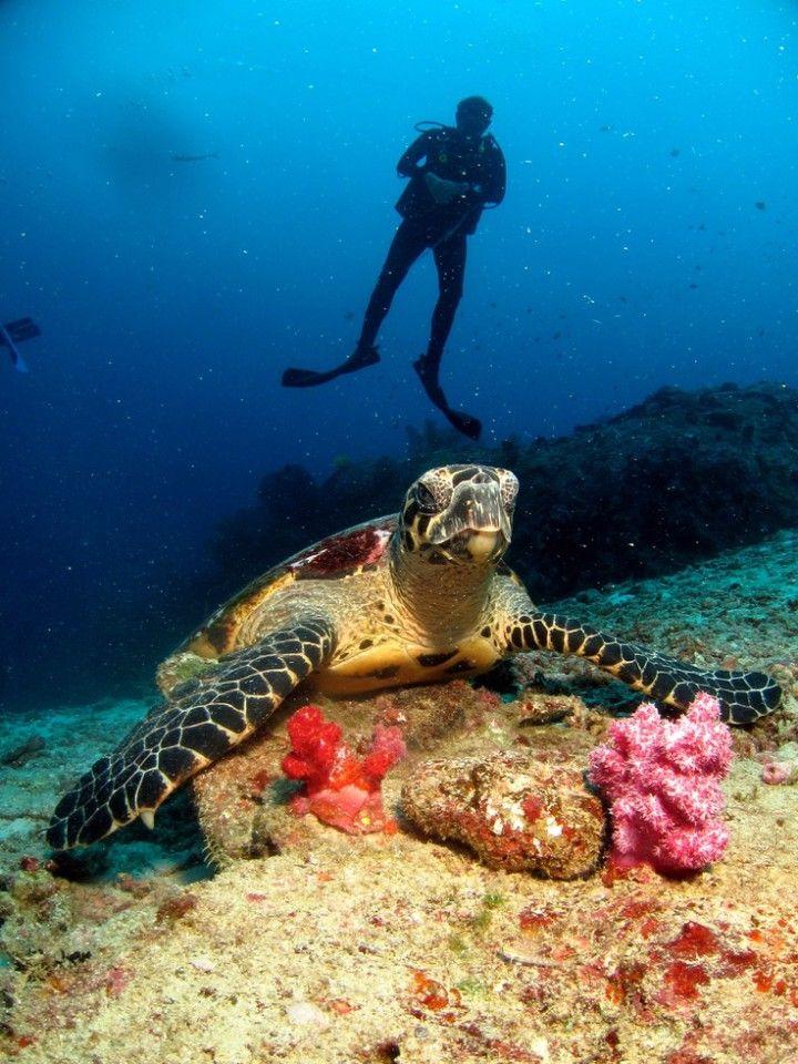 """9 reasons to visit thailand"", ""travel to thailand"", ""luxury travel thailand"", ""what to see in thailand"",""what to do in thailand"", ""diving thailand"", ""diving koh samui"", ""diving andaman islands"", ""diving similian islands"""