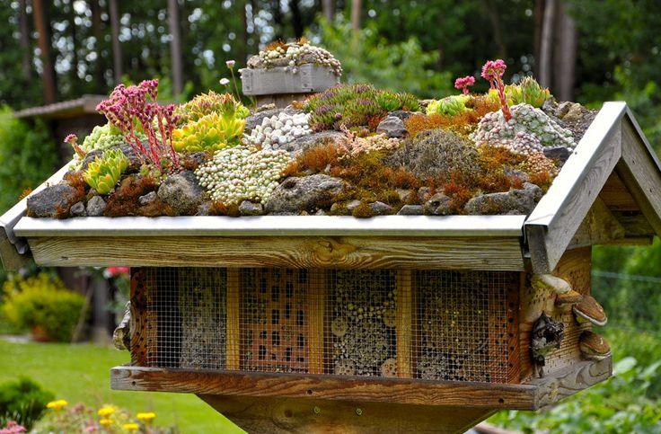 Sempervivum und Sedum auf dem Wildbienenhaus