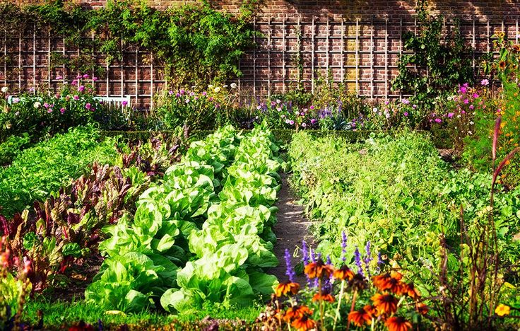 How To Plan A Pretty And Productive Vegetable Garden | Rodale's OrganicLife | With a little planning, your backyard plot can be as nice to look at as it is to eat from.