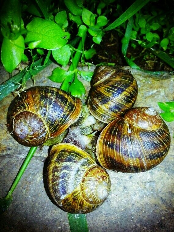 Snail Get Together.