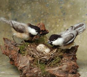 Cheeko and Dee Needle Felted Chickadees