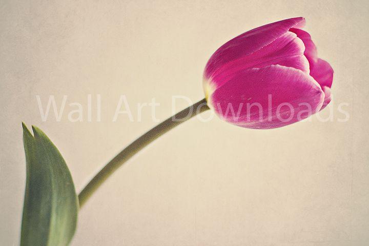 Pink Tulip Downloadable Image