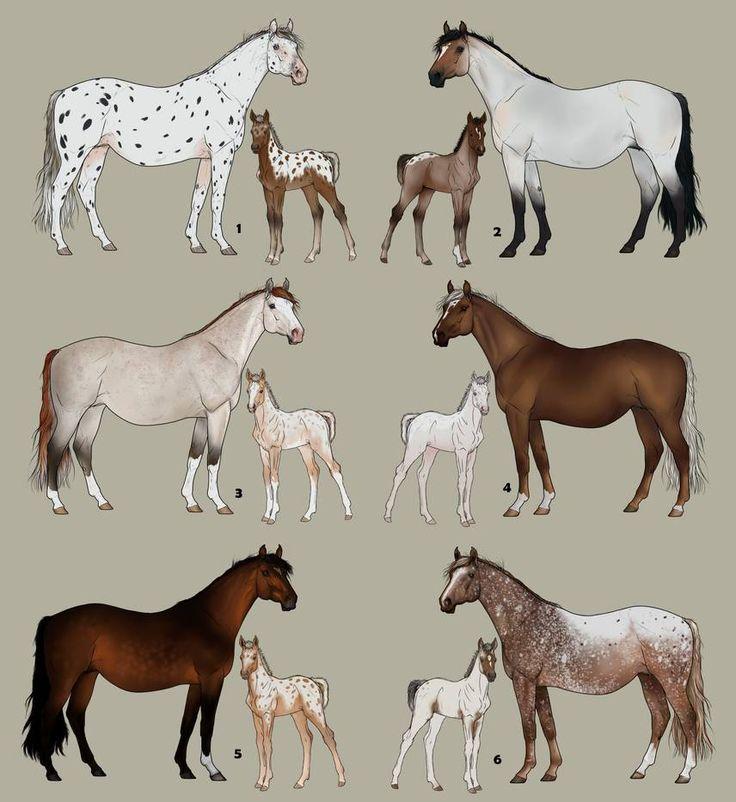 типы лошадей картинки приспособление используется