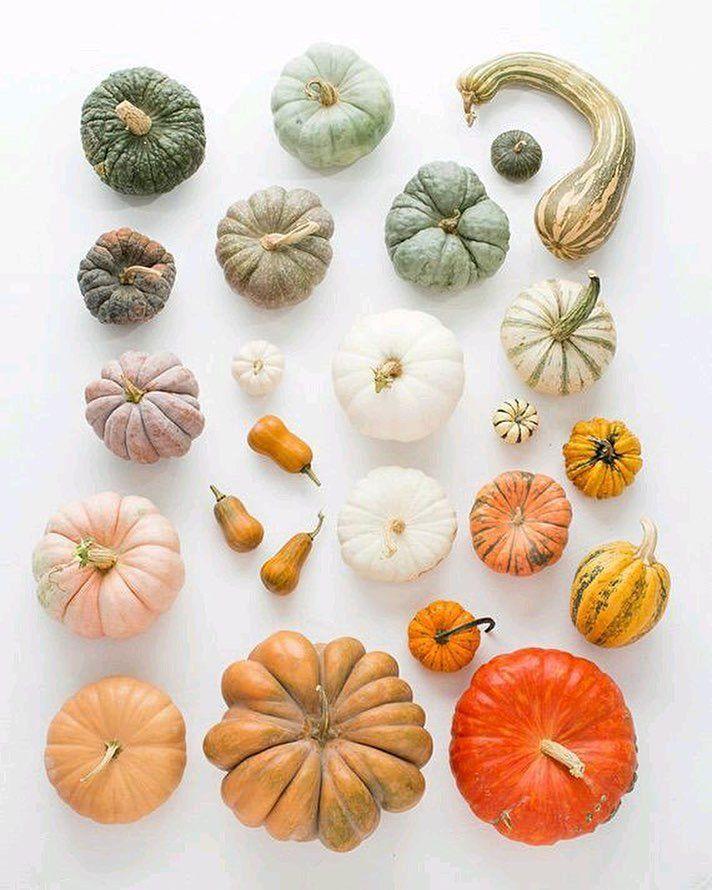 Сколько видов существует этого прекрасного овоща-ТЫКВЫ! Однако в России наиболее популярен обыкновенный вид тыквы. История этого большого оранжевого овоща начинается с Мексики. В Южной Америке выращиванием тыквой занимались ещё 3000 лет до н. э. В Европу завезли этот овощ испанцы в XVI веке. В наши дни выращиванием тыквы занимаются многие дачники так как этот овощ очень питателен и приносит много пользы для организма. В промышленных масштабах культивированием тыквы занимаются многие страны с…