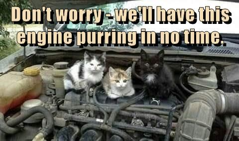 Don T Worry In 2021 Funny Cat Memes Silly Cats Cat Memes