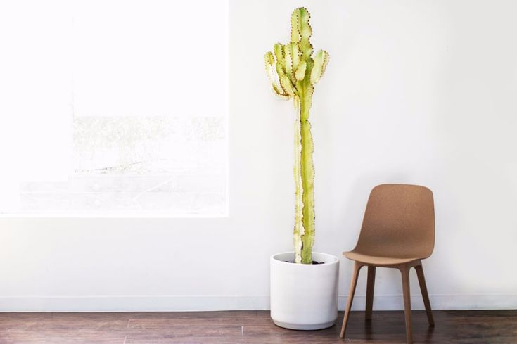 Desert Cactus - Free plant delivery in the San Francisco and Los Angeles areas by Léon & George