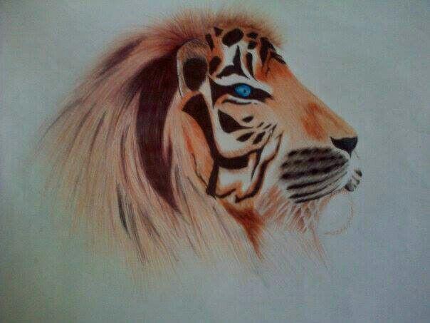 Tiger and lion mix.. colour pen sketch
