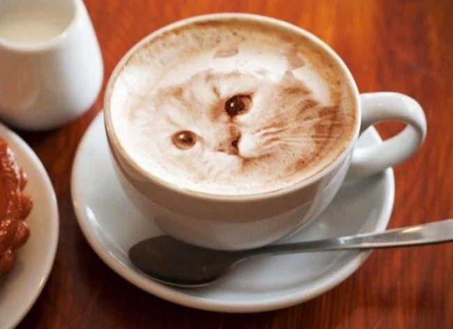 Elle Dessine des Chats Hyper Realistes dans son Café