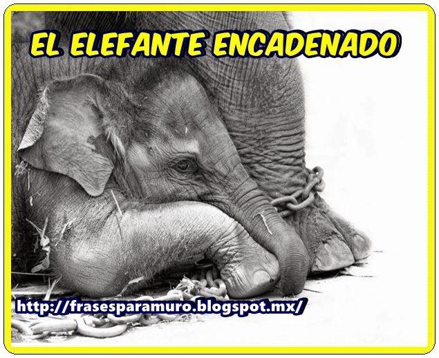 Frases para tu Muro: El elefante encadenado