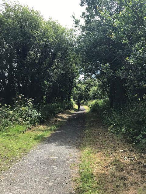 Tarka Trail, somewhere south of Bideford #disused #railway