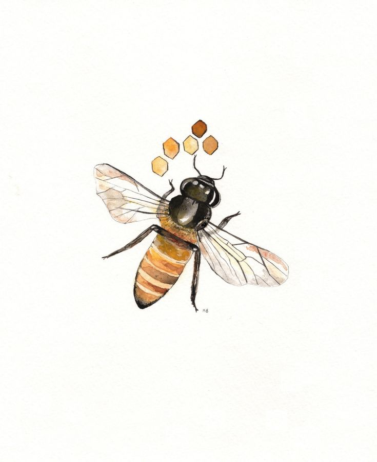Bee and Honeycomb Watercolor print