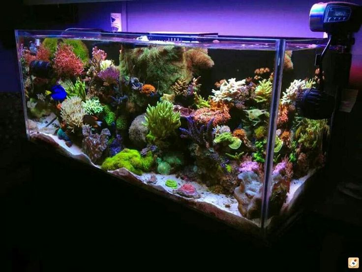 17 Best Images About Acuario Marino On Pinterest