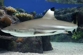 Image result for where do sharks live
