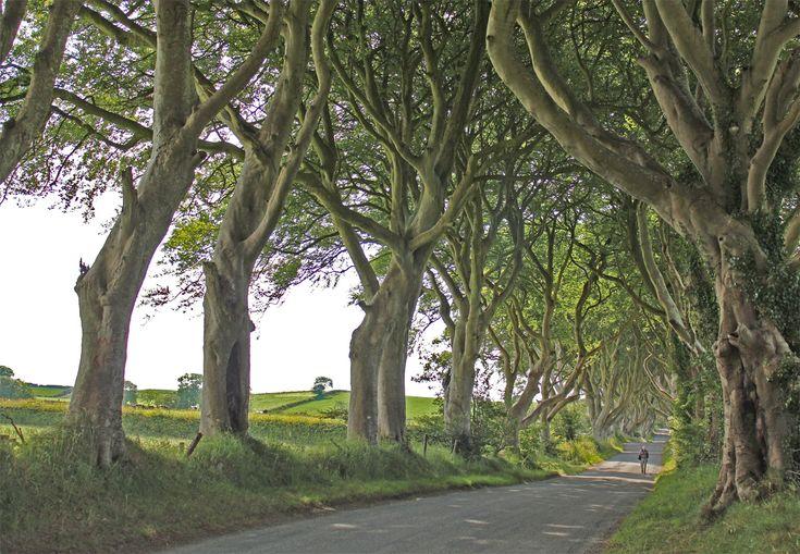 2/52 :: The Dark Hedges, Northern Ireland