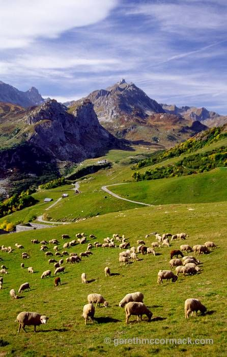 Sheep grazing above Les Chapieux, French Alps, France. Stock Photo