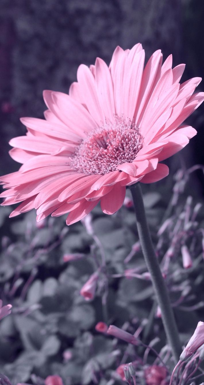 25+ best ideas about Phone wallpaper pink on Pinterest  Phone backgrounds, Phone wallpapers and