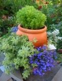Blue Lobelia - Continued!: Container Gardens, Favorite Places, Blue Lobelia One, Beautiful Flowers, Flower Gardens, Gardens Outdoor Beauty, Garden Patio