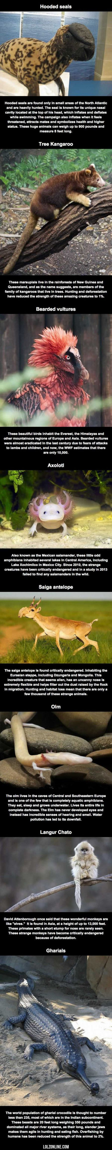 A - Animals That You Probably Don't Know Exist#funny #lol #lolzonline