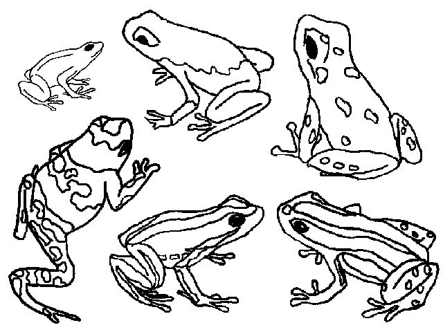 amazon com frogs stained glass coloring book 9780486412580