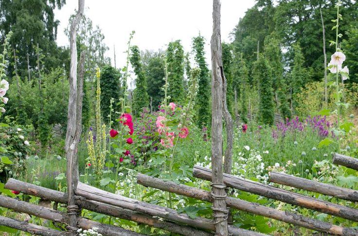Traditional roundpole fence in front of border and hop poles. (Gärdsgård framför rabatt och humlestörar)