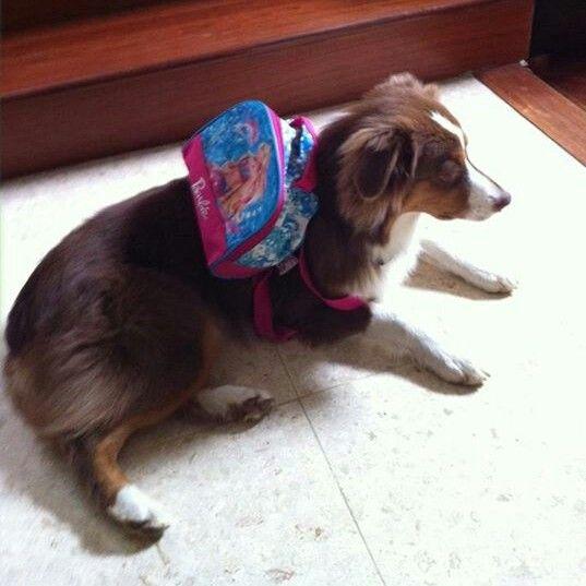 Laika esperando el transporte de Perros Felices