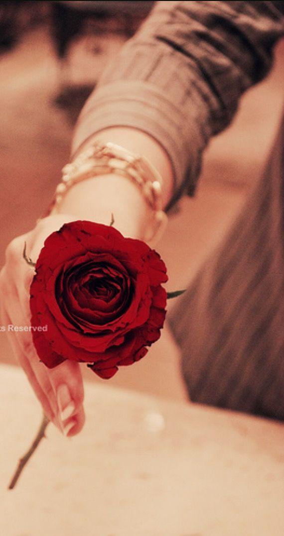 لغة الورد لغة بدون حروف ولكنها تصل للقلوب أكثر من لغة الكلام