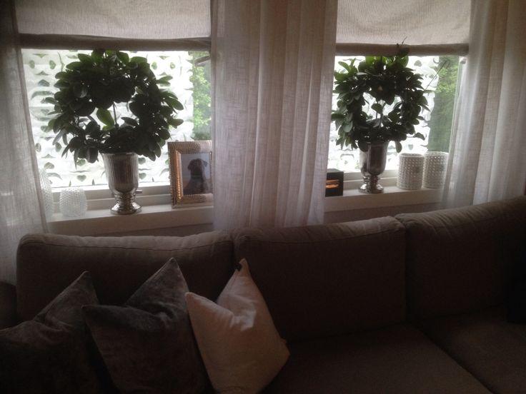 Windowsill. Livingroom
