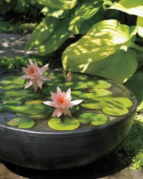 You don't need a pond to grow water lilies.
