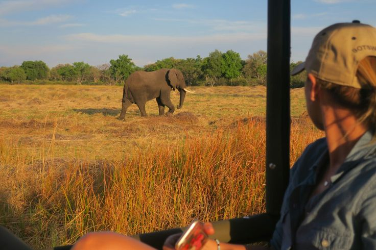 Exciting afternoon game drive with our amazing guide, Vinny 😊 A Botswana safari is about so much more than wildlife viewing though. Yes, the wildlife is phenomenal, no argument there, but the guides will teach you about the bush and everything in it, from the smallest creature to the ellies! After travelling all over the globe for 20 years I can safely say Botswana has the friendliest people on our planet. . . . #onsafari 😁 #lovethisplace #loveDDS #Botswana #safari #girlswhotravel…