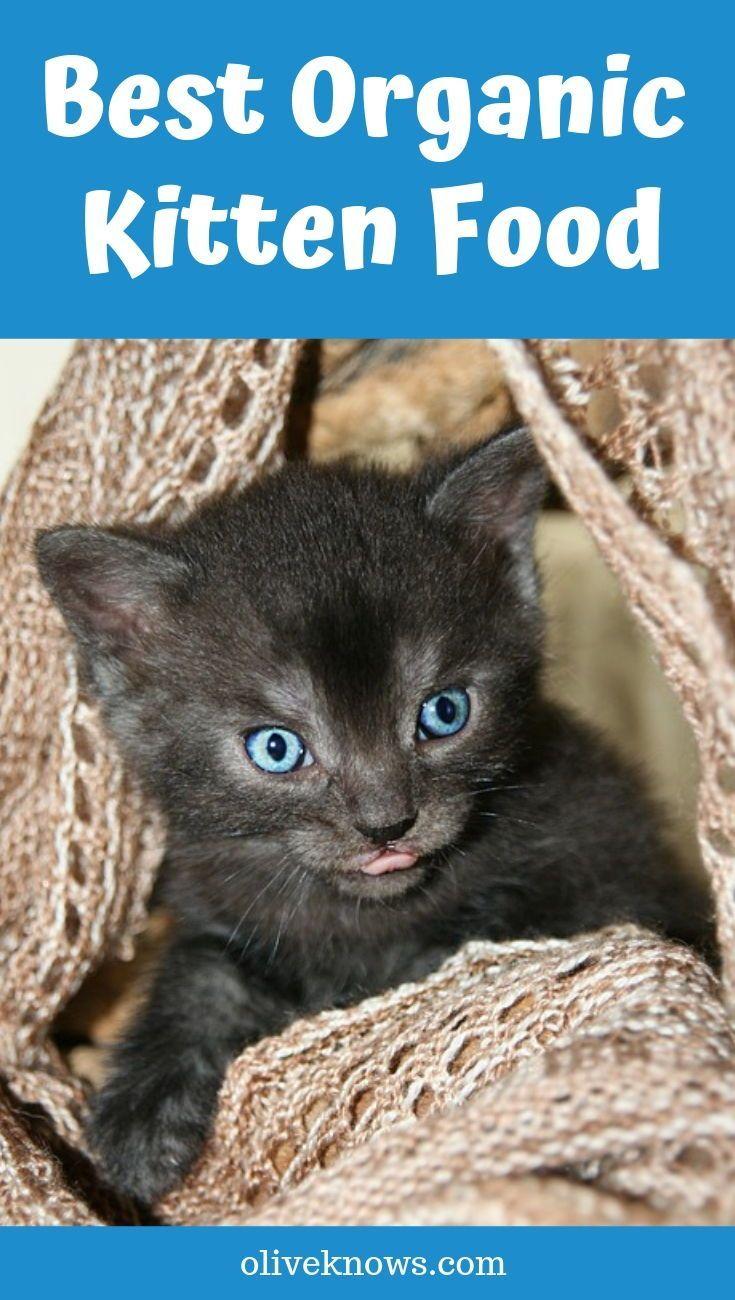 Best Organic Kitten Food New 2020 Picks Oliveknows Kitten Food Cat Care Organic Cat Food