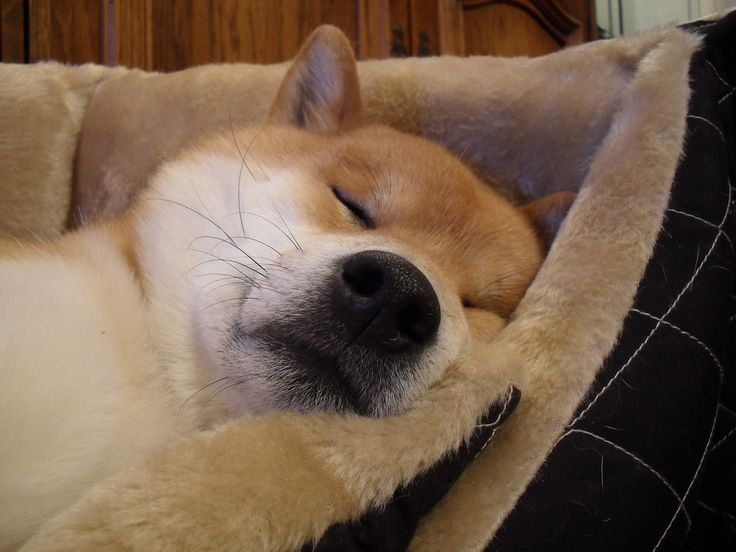 Time for a nap. Or two. Or maybe even the whole goddamn day!   Aito likes to takes it easy. Who doesn't?
