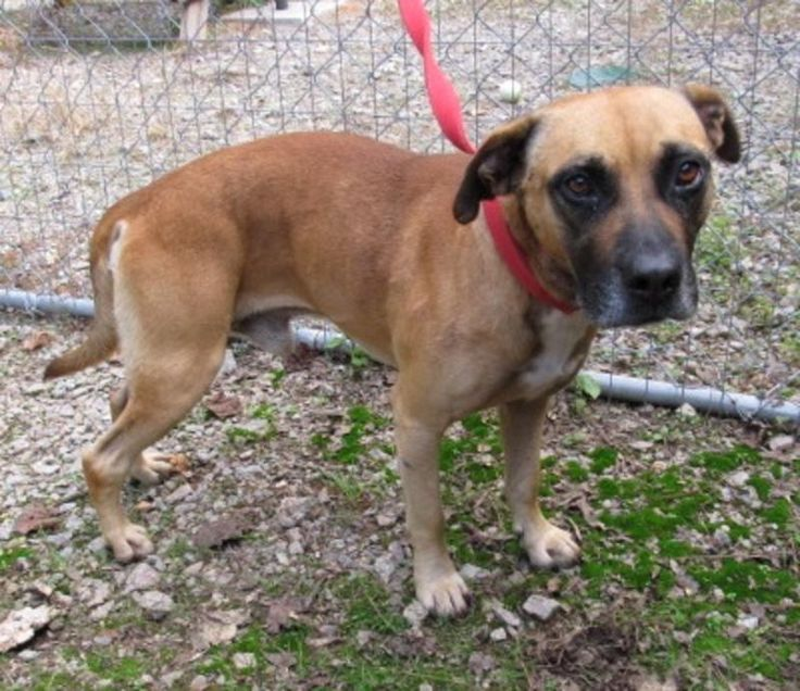 Lee County Animal Services Adoption Search Results