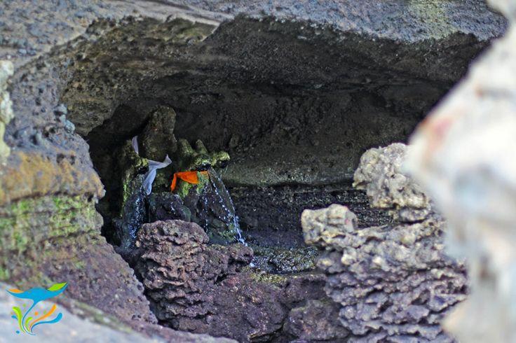 Goa di bawah Pura Tanah Lot tempat mengambil air suci. Meski berada di tengah laut, airnya tawar.