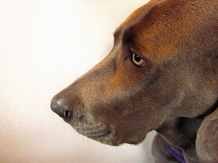 Basic Obedience Training for Dogs