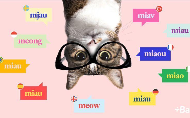"""Il giorno in cui si celebra l'orgoglio felino potete divertirvi a imparare il """"gattese"""" e a scoprire i proverbi in tutte le lingue che riguardano i gatti. L'app Babbel, che aiuta l'apprendimento veloce degli idiomi stranieri, ha incluso nel suo menù anche quello di questi pelosi amici a quattro zampe. ..."""