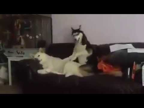 funny dog videos , How a dog want his friend Wake up Buddy , cute dog videos - YouTube