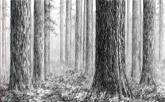 Auf diese Seite erkennen Sie, wie kann man selber den Wald mit Bleistift zeichnen. Die Anleitung dafür finden Sie auf folgende Seite.