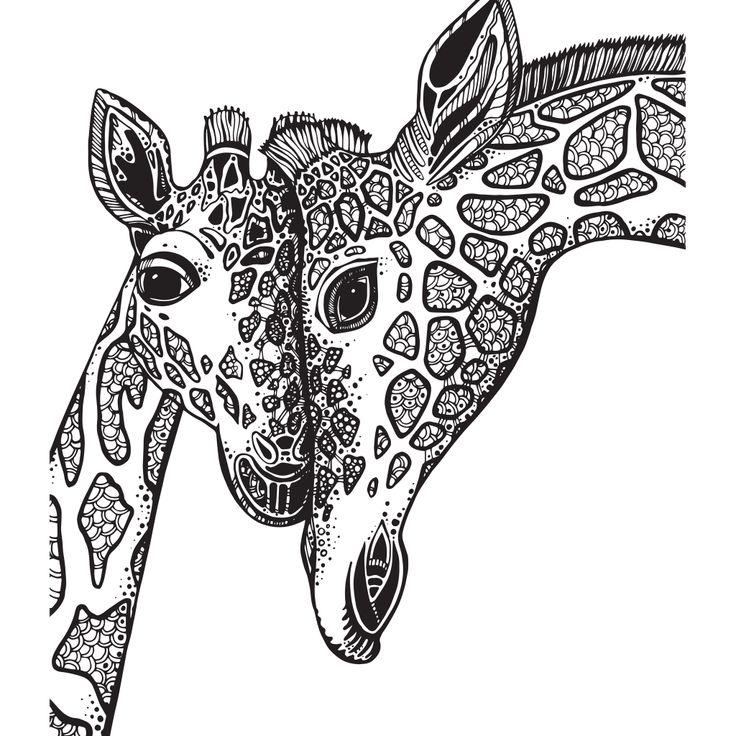 Adult Coloring Book Giraffe Sketch