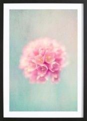 baby pink - Framed Premium Poster