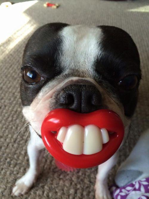 Hank the goofball. <3