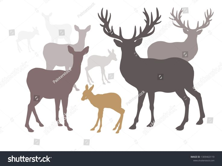Deer family set collection silhouette style, Vector illustration wild animals de…