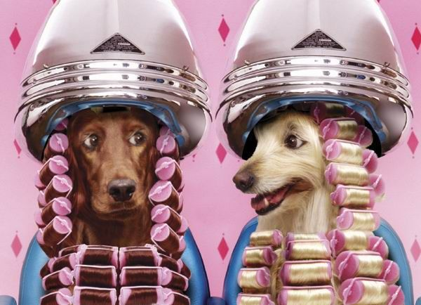 Resultados da Pesquisa de imagens do Google para http://2.bp.blogspot.com/_qOvKLMRpAr4/S_7Ny62GtyI/AAAAAAAAAAk/EQs-VmmWR98/S741/animais_luxo.jpg