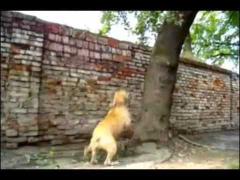 Awesome Dogs - Video Clips - Part 2