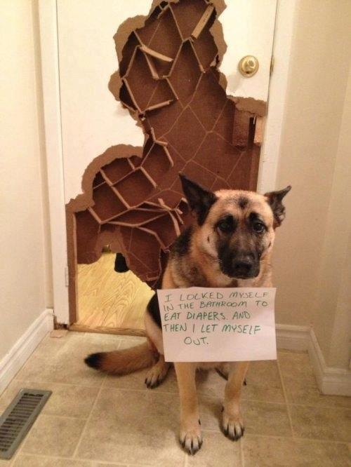 1000 images about dog shaming on pinterest blue wall for Locked myself out of my bathroom