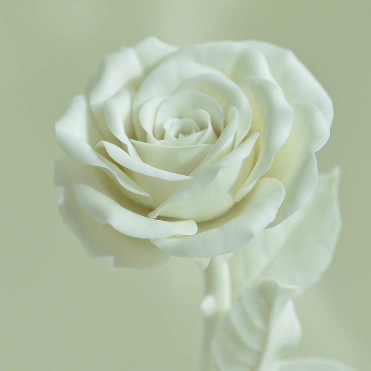 758 отметок «Нравится», 60 комментариев — Porcelain flowers. Ceramics. (@anri.irene_porcelain.art) в Instagram: «Biscuit white porcelain, no glazed. Gentle rose. #fineporcelain #porcelainflowers #ceramicflowers…»