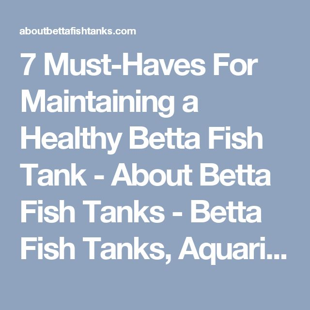 7 Must-Haves For Maintaining a Healthy Betta Fish Tank - About Betta Fish Tanks - Betta Fish Tanks, Aquarium Supplies & More!
