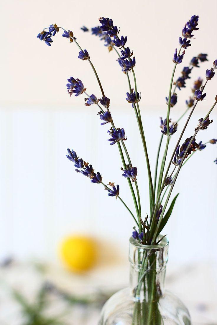 107 best flores flowers images on pinterest for Como sembrar plantas ornamentales