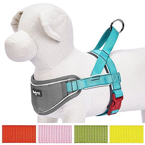 """Blueberry Pet 5 Colors Soft & Comfy 3M Reflective Strips Padded Dog Harness Vest Chest Girth 16.5"""" - 21"""" Lake Blue Small Nylon No Pull Adjustable Training Harnesses for Dogs"""