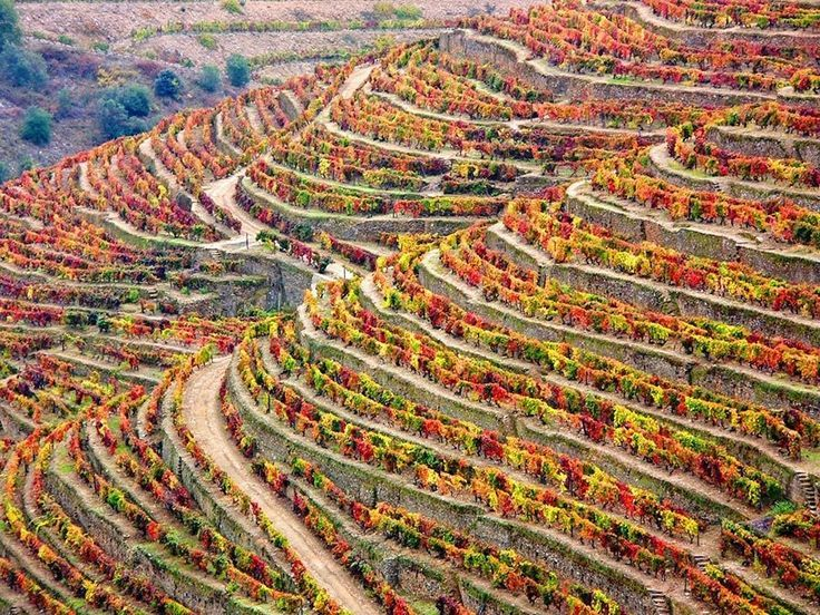 Douro Valley - UNESCO World heritage in Portugal