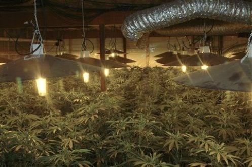MARIJUANA ROOM http://www.growingmarijuanaebook.com/